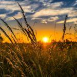 Stymulatory wzrostu upraw w branży rolnej